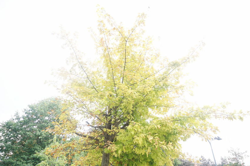 The return of grey light Autumn Bright Clear Sky Day Experimental Grey Light Hinterland Light Trail Low Angle View Lush Foliage Nature Outdoors Over Exposed Overexposed Park Scenics Sky Trees Urban Nature Urbanexploration