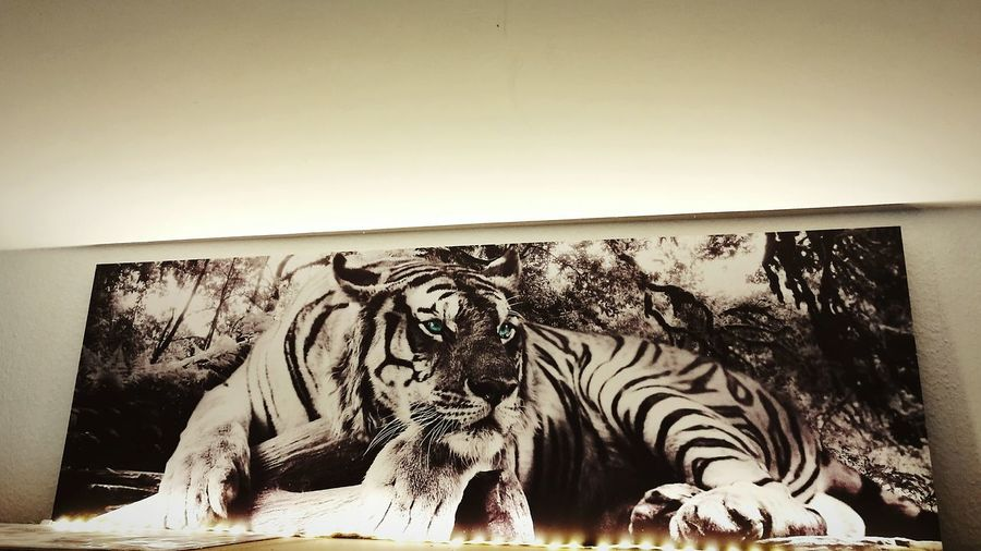 Animals In The Wild Tiger-love Tiger Love Tiger Eyes  Tiger Portrait Tiger Print Tiger HuaweiP9plus Huawei P9 Plus Huawei P9 Leica Huawai P9 HuaweiP9 Huaweiphotography Huawei Shots Leica Lens Huawei P9. тигр Tigers❤ Tigerlovers Tiger Cat TIGRE❤ TIGRES❤ картина Bilder ... ♥ Bilderwand