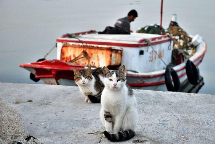 cats Cat Domestic Animals Domestic Cat Looking At Camera Outdoors Pets