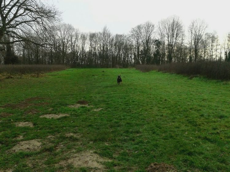 *ich (Freya)* -- Rottisserie { My Lovely RottWeiler } Hunderunde Runrunrun! Mein Hund