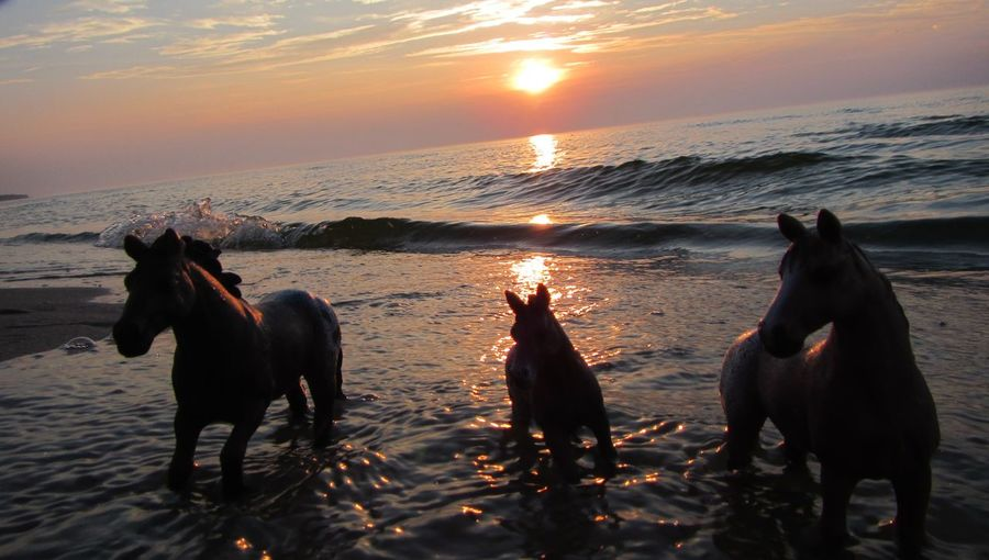 Horses playing in water Horses Playing In Water HorsesAnimal Themes Baltic Sea Beach Beauty In Nature Domestic Animals Horse Horse Family Mammal Nature Outdoors Pets Sea Sky Sunset Water Waves Wild Horses EyeEmNewHere Mustang Summer Welcome To Black EyeEm Diversity The Great Outdoors - 2017 EyeEm Awards BYOPaper! Live For The Story EyeEm Selects The Week On EyeEm Pet Portraits Lost In The Landscape Perspectives On Nature EyeEm Ready   Visual Creativity Summer Exploratorium