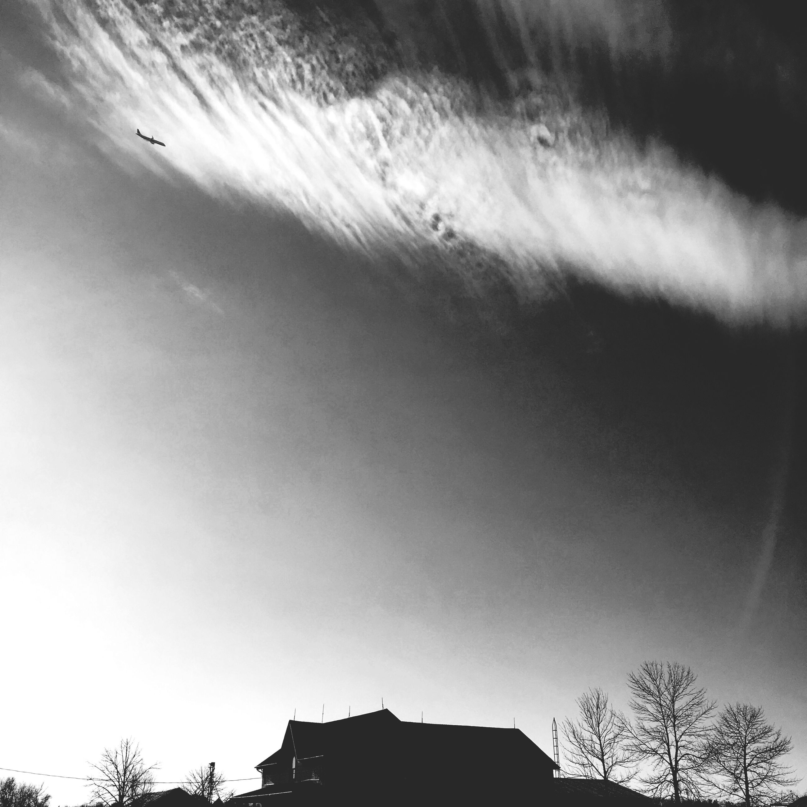 building exterior, low angle view, architecture, built structure, tree, flying, house, sky, clear sky, silhouette, high section, residential structure, residential building, outdoors, building, bird, nature, day, no people, city