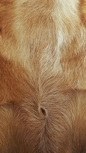 Ruby's Swirl Ruby Swirl Fur Chest Dog Puppy Brown Browndog Full Frame Backgrounds Background Furry Hair Textures Hairy  Cool Design Close-up No People Textured  Pet Portraits