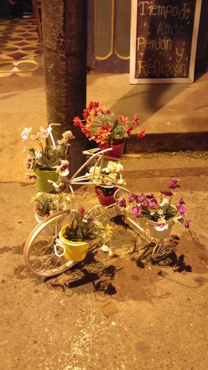 ArtWork Bicycle Bike Flower Flowers Nature Night No People Outdoors