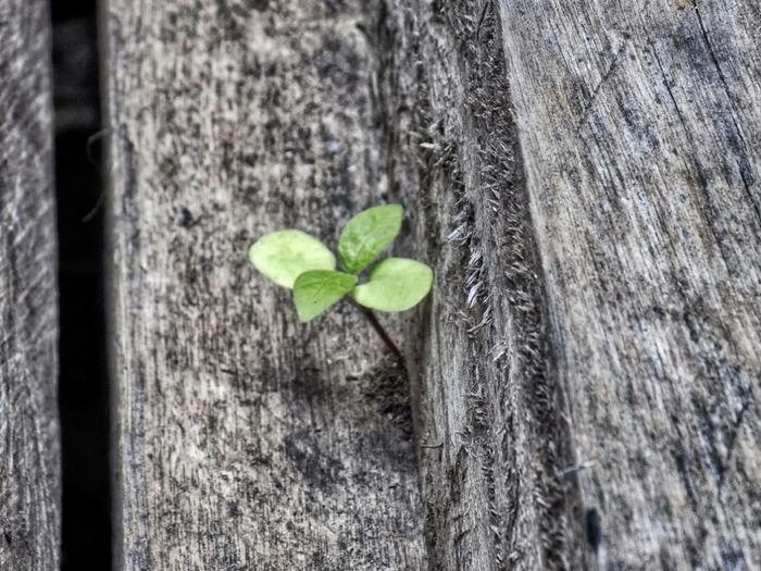 Leaf Close-up Plant
