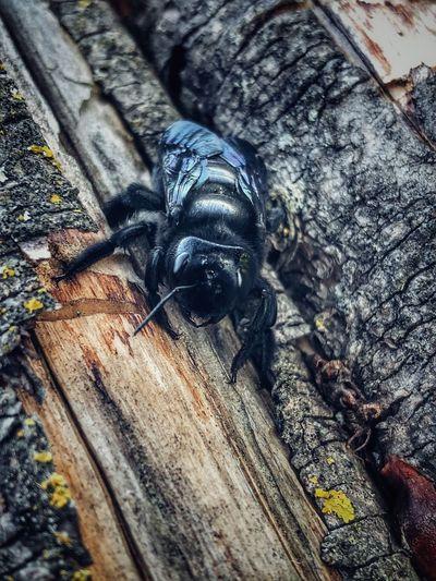 Bug Animal