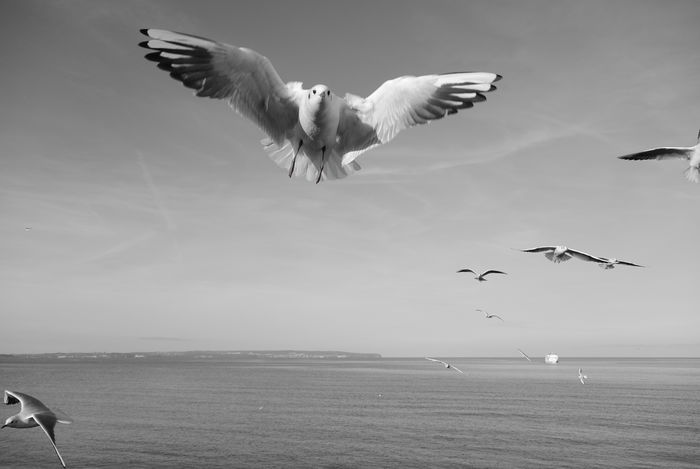Balance Blackandwhite Flying Seagull Spread Wings The Great Outdoors - 2016 EyeEm Awards The Essence Of Summer Fine Art Photography From A Bird's Eye-view My Year My View waiting game Welcome To Black The Great Outdoors - 2017 EyeEm Awards