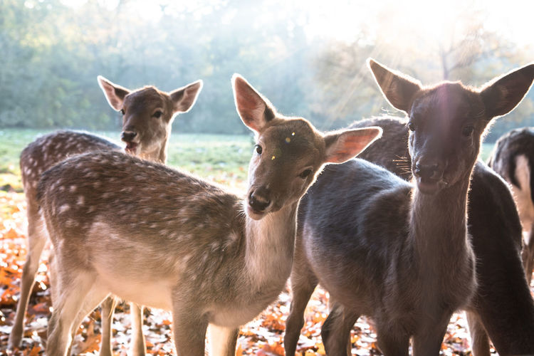 Animal Themes Animals Curious Day Deer Fawn Grass Mammal Nature No People Outdoors Sunlight Togetherness