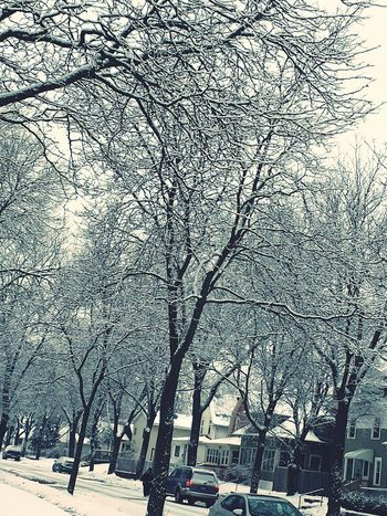 It's Cold Outside luv how the snow make the trees look EyeEm Nature Lover Nature Photography