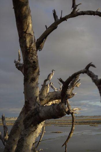 Bird Outdoors