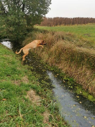 View of dog with stream in grass