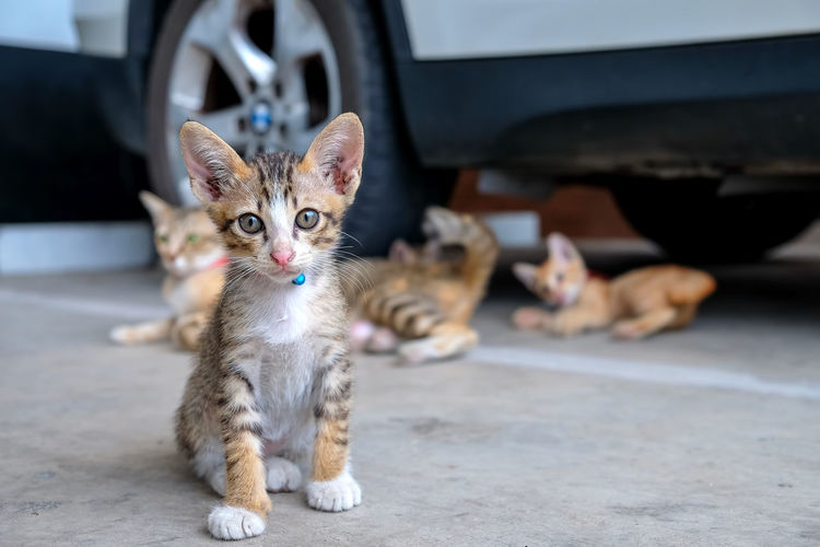 Portrait of kitten on street
