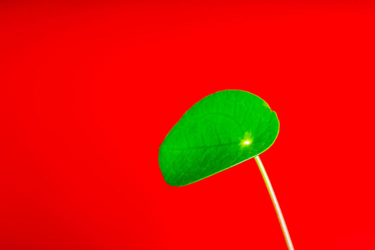 Close-up of green leaf against red background