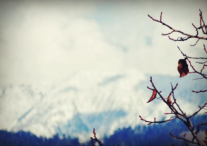 Theconvexview Photography FacebookPage  FollowUS Preraksharma Illustrious Snow Hills