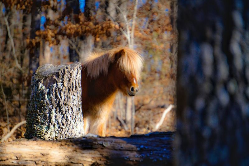 Close up of horse against blurred background