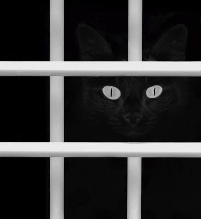 رمزياتBBM صور_رمزية رمزيات_منوعه Photo♡ صور رمزيات  First Eyeem Photo On A Health Kick Cat
