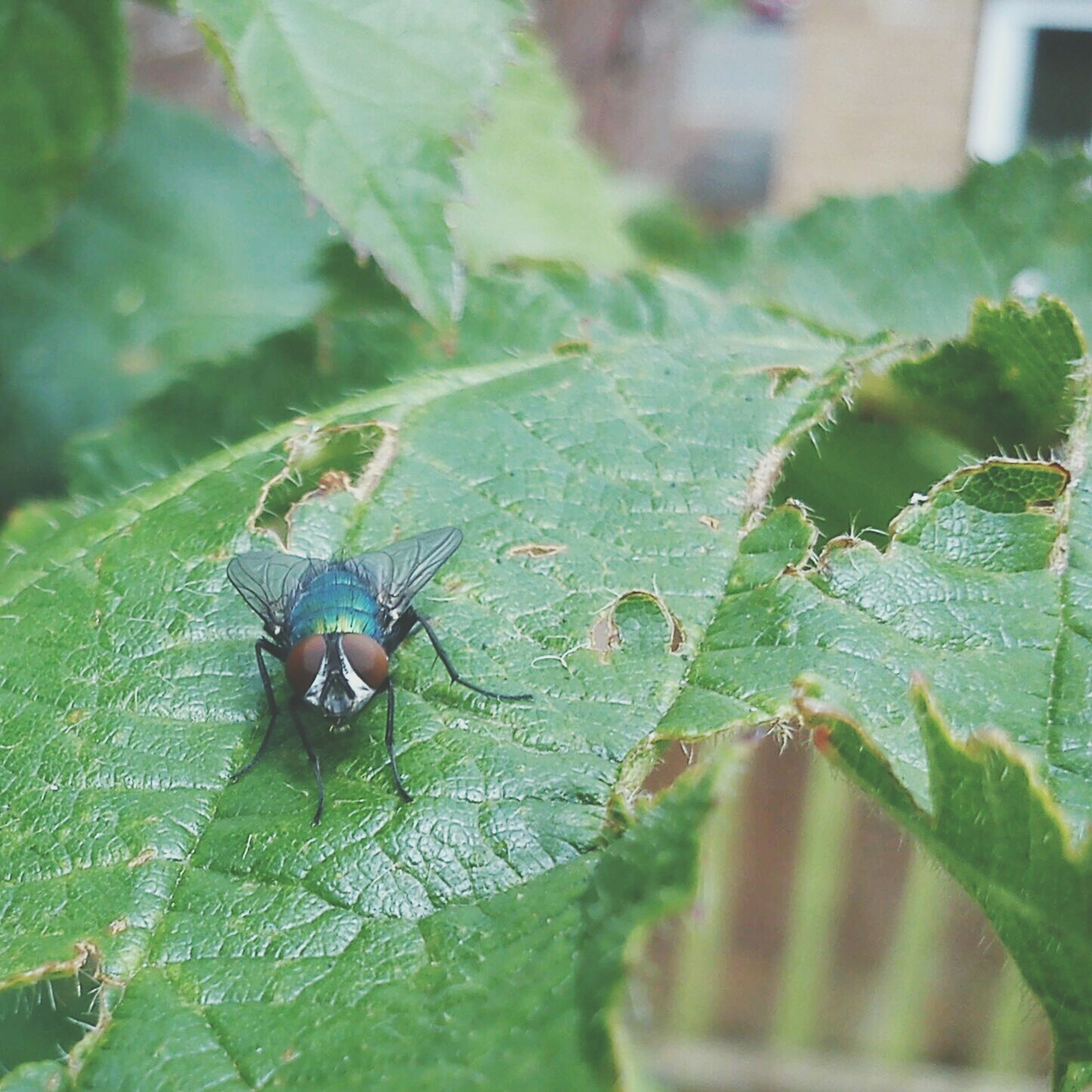 insect, animals in the wild, animal themes, one animal, leaf, wildlife, green color, close-up, focus on foreground, selective focus, nature, plant, leaf vein, day, outdoors, no people, water, high angle view, drop, wet