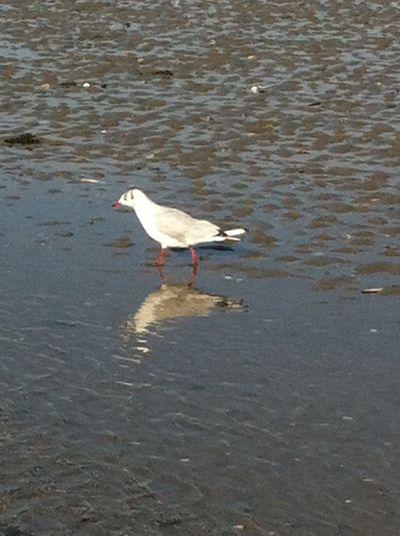 Trouville, Deauville Plage 🌴 Plage Soleil Mer Deauville Slable Mouette Oiseaux Plage