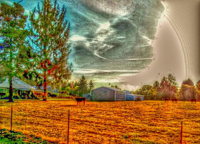 Different Perspective Check This Out Farmlife Cows In The Meadow Nature Is Art Color Palette Isnt Nature Grand? Make It Yours Color Explosion Shimmering Details Textures And Shapes Steamzoofamily Surealism Dreamstate Dreaming An Original Color Portrait Its All In The Details Focus On Foreground Focus On Background Just Focus Animal Photography Cows!!! Moooooo Hanging Out