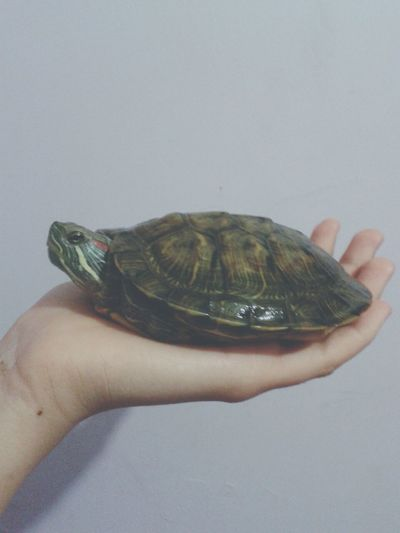 well this is my turtle ?is lovely Cute Animals Turtle Hi! Love Green Sea
