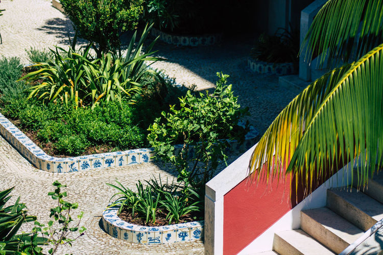 High angle view of palm trees by swimming pool in yard