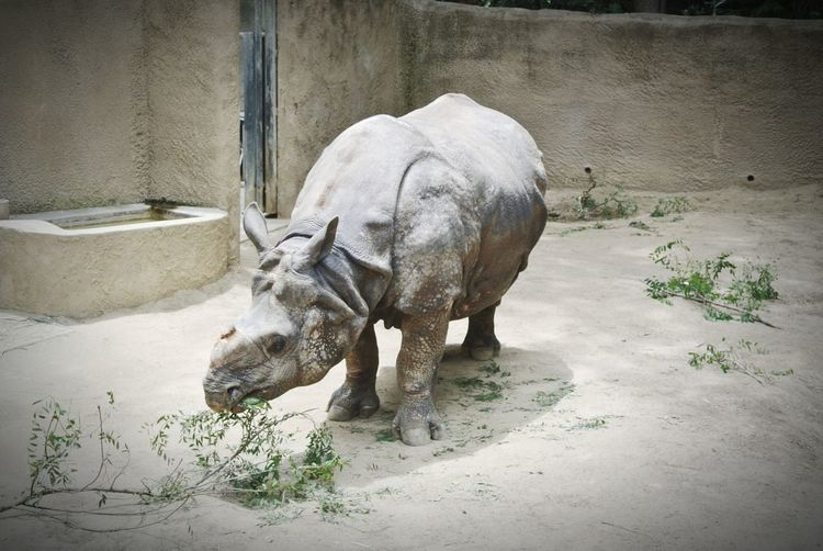 LA Zoo Rhino Animals Taking Photos Beautiful Sky Check This Out Enjoying Life