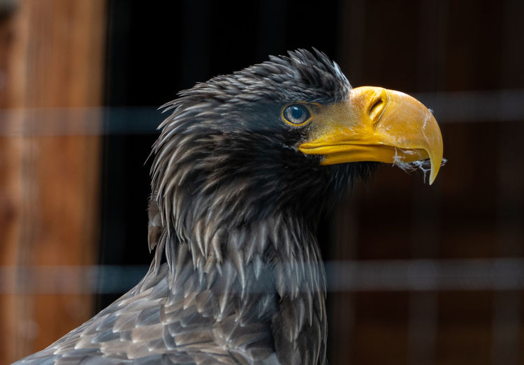 A eagle portrait Bird Animal Themes Animal One Animal Vertebrate Animal Wildlife Animals In The Wild Beak Animal Body Part Close-up Focus On Foreground Bird Of Prey Animal Head  No People Looking Day Eagle Eagle - Bird Looking Away Side View Profile View Animal Eye Eagle Portrait