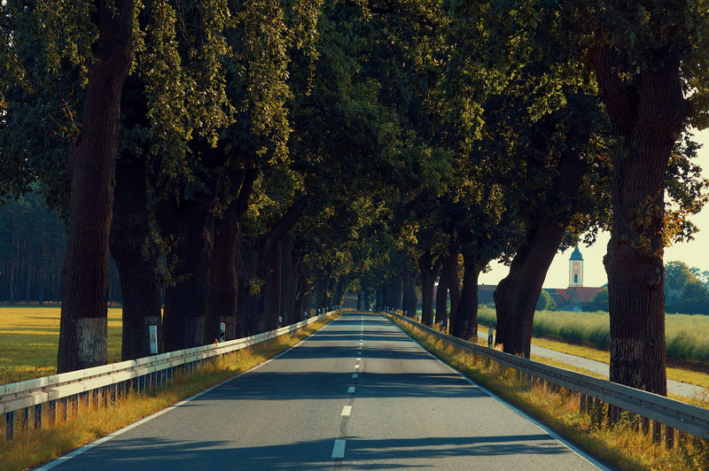 Empty Street Asphalt Avenue Avenue Of Trees Beauty In Nature Brandenburg Countryside Day Empty Road Germany Leaves Nature No People Outdoors Province Road Road Rows Of Things Scenics Shadows & Lights Straight Sunlight The Way Forward Transportation Tree