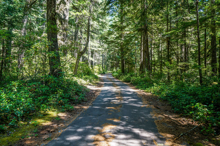 Evergreen Trees Green Hiking Nature Oregon Roads Sunny Trails Travel Trees View Bushes Cabin Day Ferns Forest Journey Landscape No People Outdoors Pine Tree Scenics Summer Wooded Woods