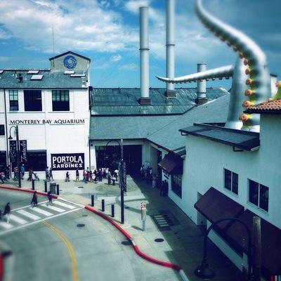 Day 27 of my 30 Days With Hipstamatic. Americana / Blanko Freedom 13 30 Days With Hipstamatic EyeEm Ambassador Purehipstamatic Monterey Bay Aquarium