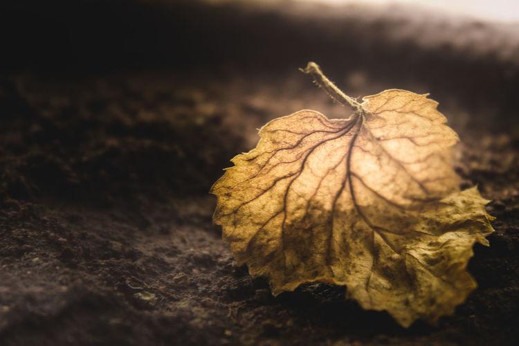 Brwon Autumn