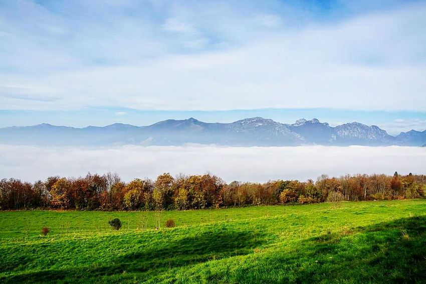 Me Nature Paradise Sky Italy Tree Details Clouds And Sky Colorful Travel Photography Foggy Day Autumn🍁🍁🍁 Loveit❤ Mointain View Sunset #sun #clouds #skylovers #sky #nature #beautifulinnature #naturalbeauty #photography #landscape Mointains Love ♥