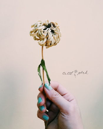 Nails... Wilted Flower Nails Dry Flower