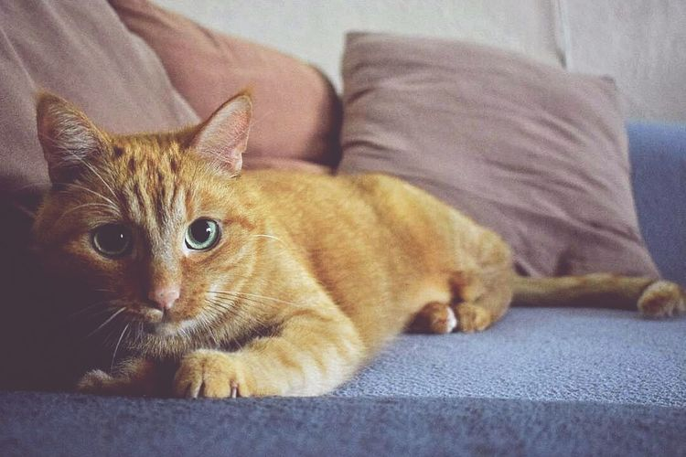 Domestic Animals My Little Puppy ♥ Love Cats My Home Cat The Moment Animal Themes