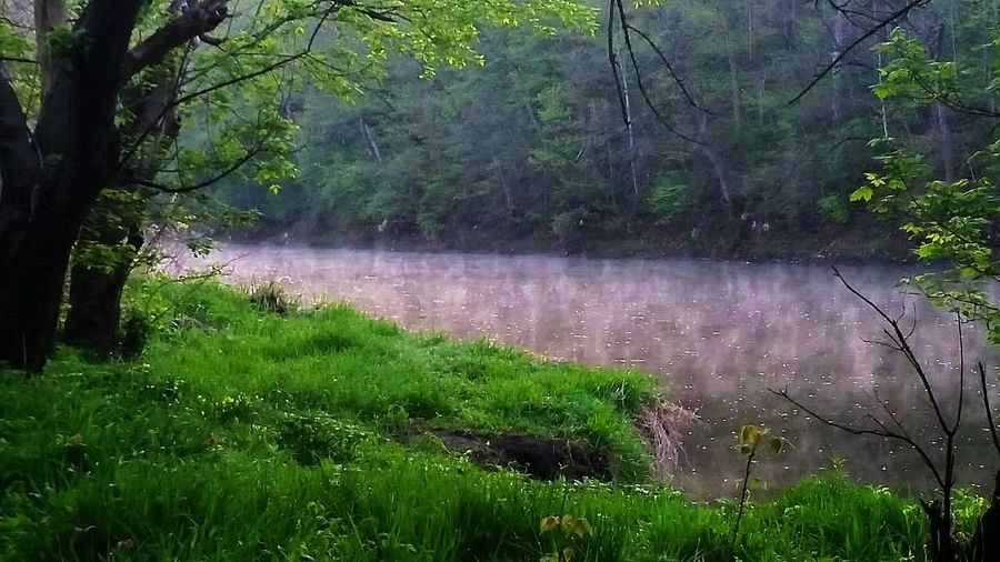 River View Fog