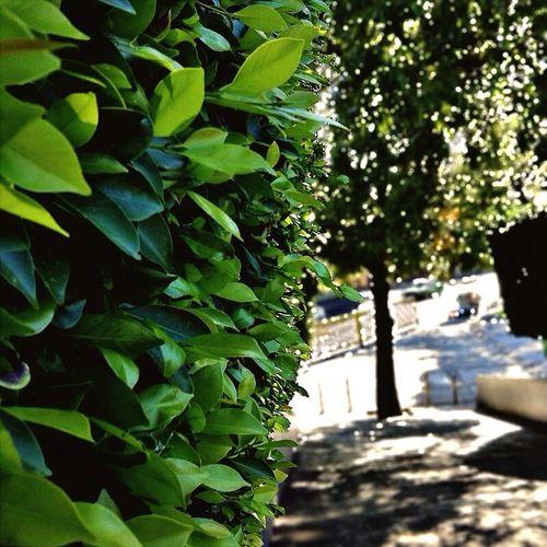 Enjoying Life Walking Around Green