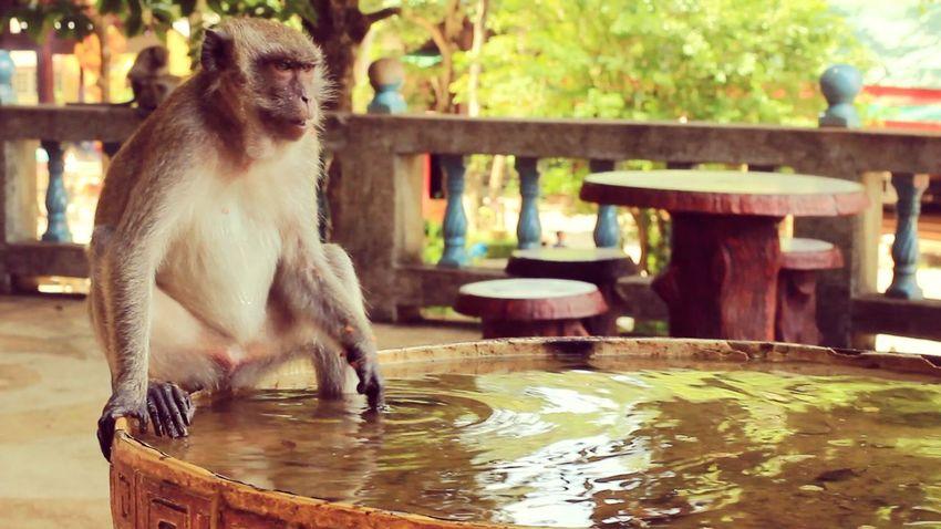 Animals Wildlife Nature Travelling