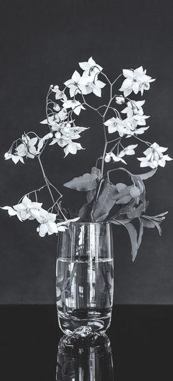 Close-up of flower vase on glass table against black background