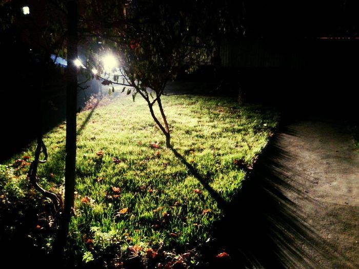strange backyard