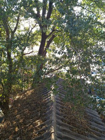 Tree Outdoors Green Color No People Nature Day Growth Sky Sunlight And Shadow Shade Prestige Protection Branch Roof High Angle View Scenics Tranquility