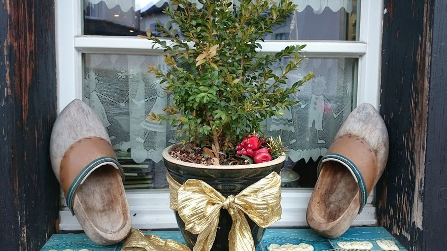 Close-up of shoes by potted plant on window sill