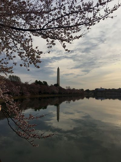 Washington Monument Reflection Tree Water Architecture Building Exterior Built Structure Sky No People Travel Destinations Nature Waterfront Outdoors City Lake Day rickeherbertphotography