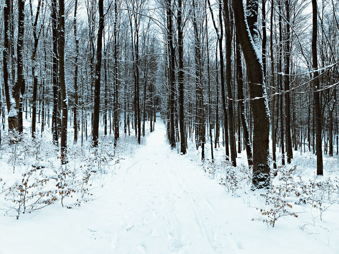 Beauty In Nature Cold Temperature Landscape Nature No People Outdoors Snow Tree Winter
