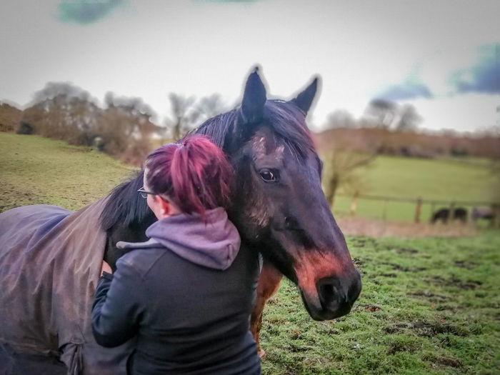 Horse love Oil