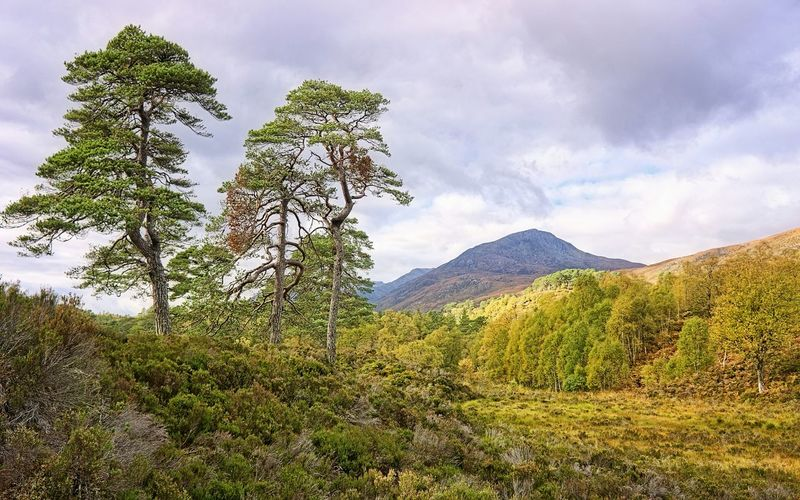 My favourite trees - old Scots Pines in the Caledonian Forest at Glen Affric Hugging A Tree Glen Affric Scotland Scottish Highlands Trees The Great Outdoors - 2015 EyeEm Awards Pine Trees HDR Hdr_Collection Nature On Your Doorstep