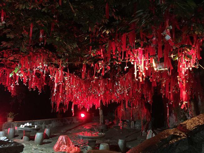 夜雨登泰山时偶遇的祈福树, 泰山 祈福树