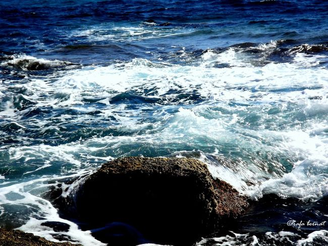 En un roquedo de la Coveta Fumá, El Campello, Alicante, Spain. EyeEm Nature Lover EyeEm Best Shots Eye4photography  Nature Landscape Taking Photos Hello World Water Sea Photography