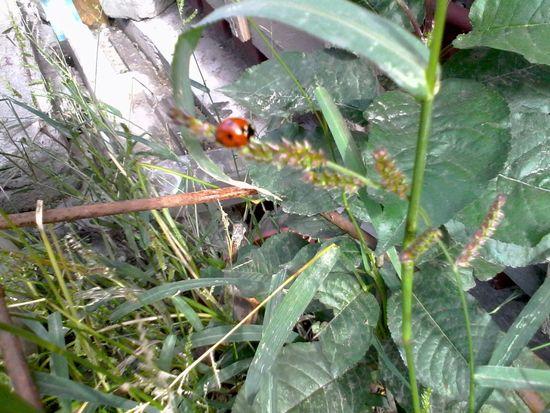 Ladybeetle Ladybug Unedited Green Plants Grass Wolfzuachis Eyeem Market