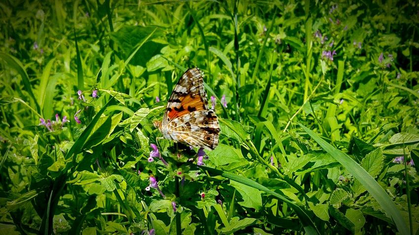 Photo By Rich Facebook.com/photobyrich Pure Relaxing Photography Garden Enjoying Life Taking Photos Pillango Butterfly Amazing