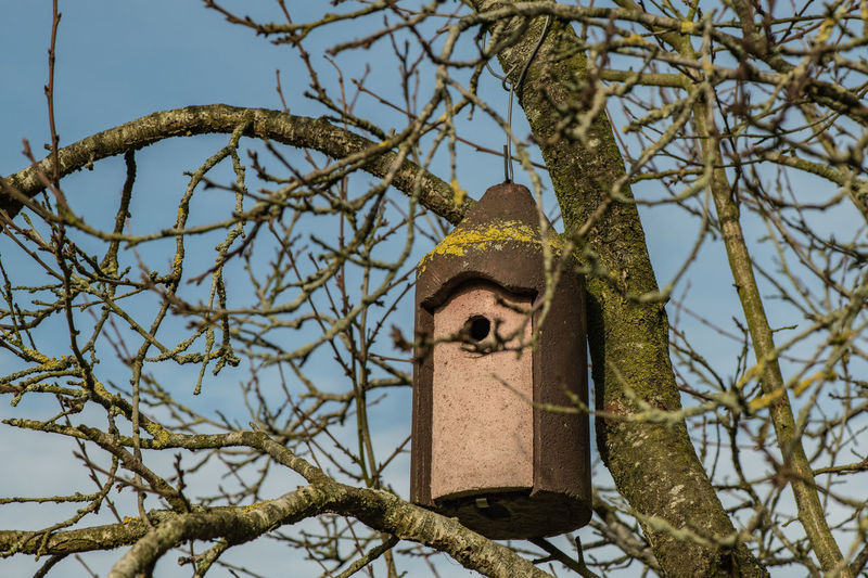 Tree Branch Low Angle View Bare Tree Birdhouse Bird Nature Focus On Foreground Animal Sky Outdoors Perching Bird Nests